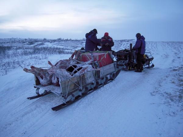 Фотогалерея сани волокуши для снегохода - фото 1